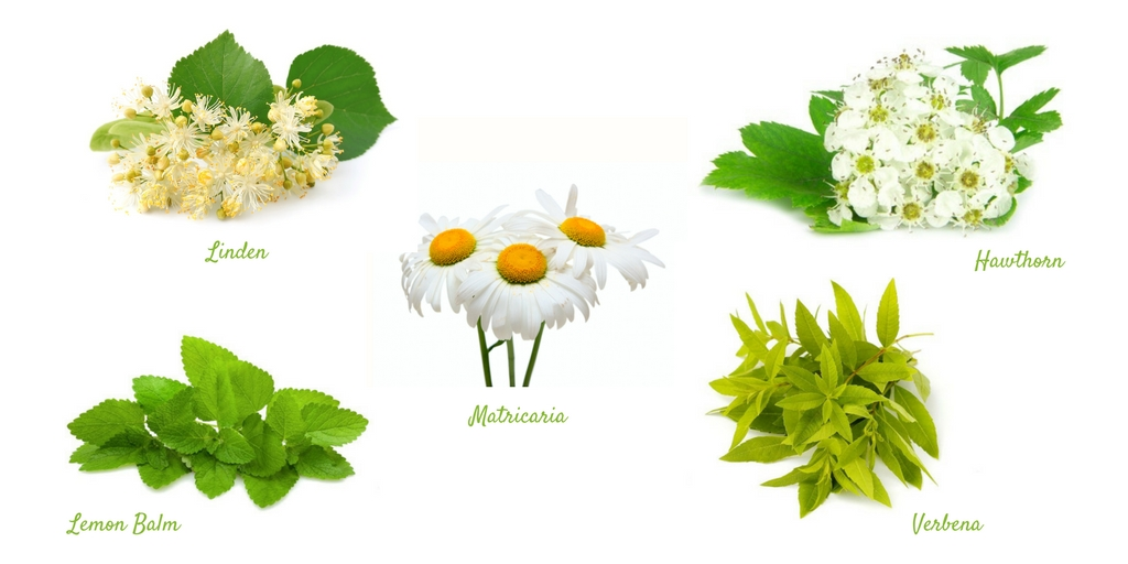 5 Plants to Induce Relaxation and Reduce Anxiety and Stress